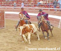 Rodeos in Chile - Traditional Huaso Sport Photos